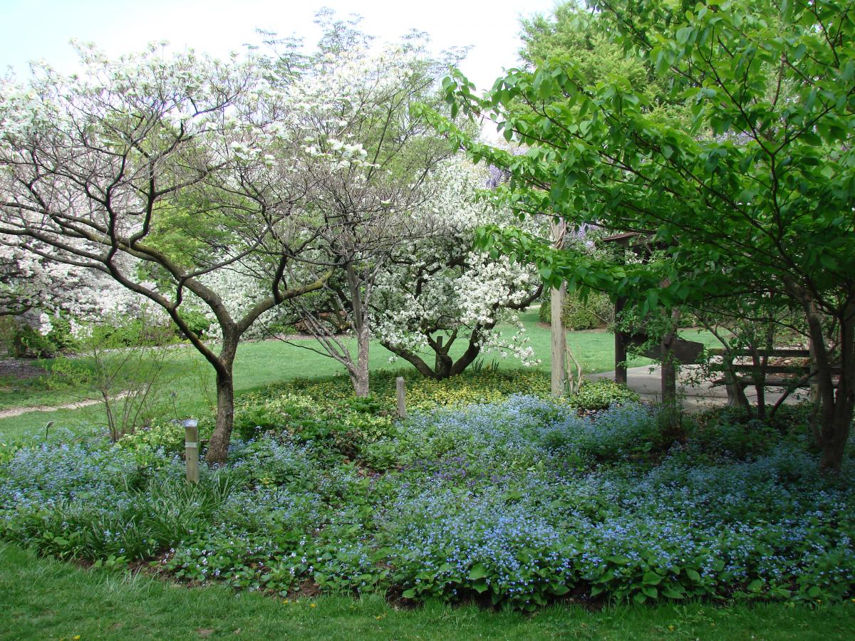 Forget-Me-Not Garden