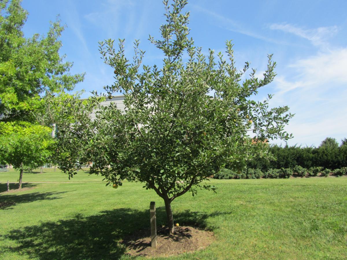 Barbara Jean Johnson Promenade | Chadwick Arboretum & Learning Gardens