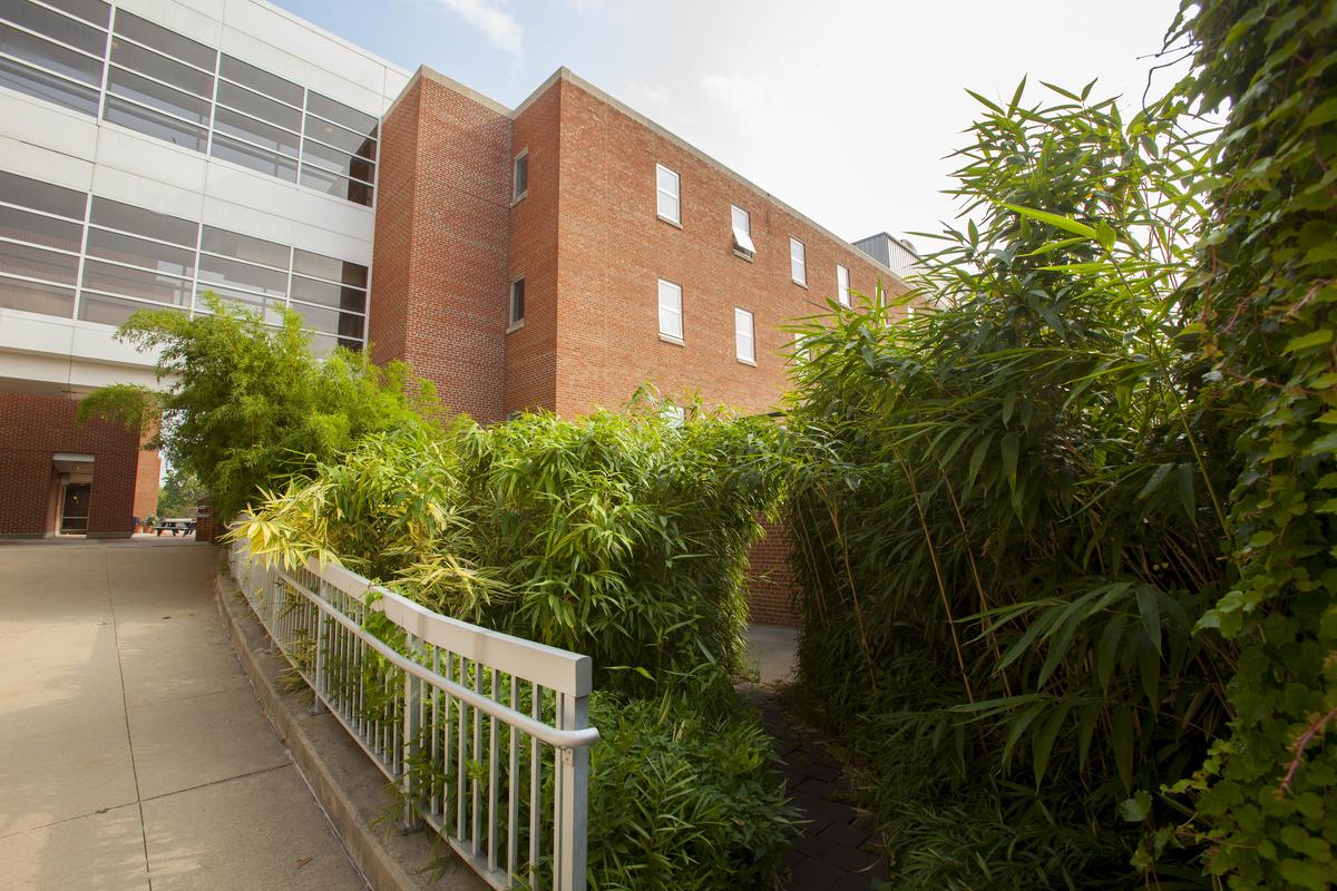 Bamboo Garden | Chadwick Arboretum & Learning Gardens