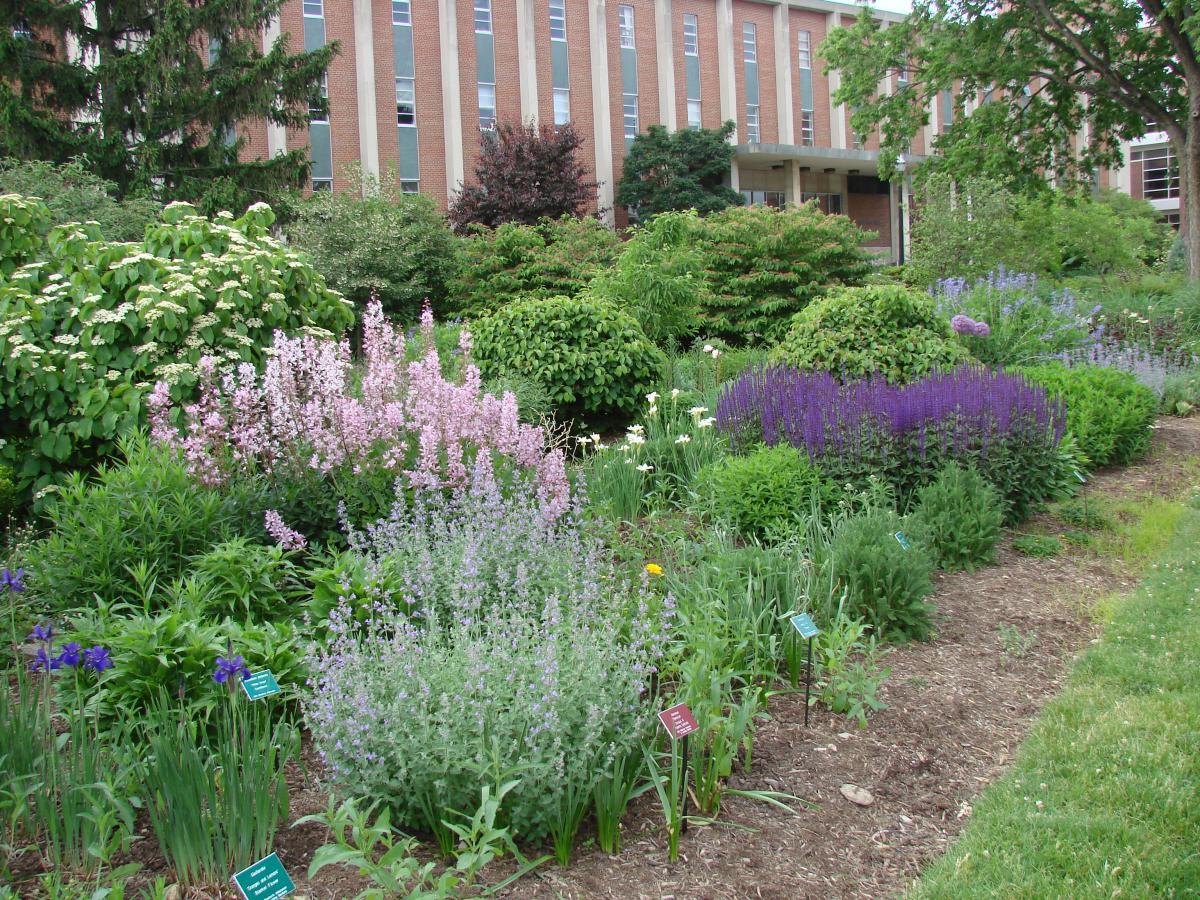 Bert josephine kleinmaier perennial garden chadwick for Perennial garden
