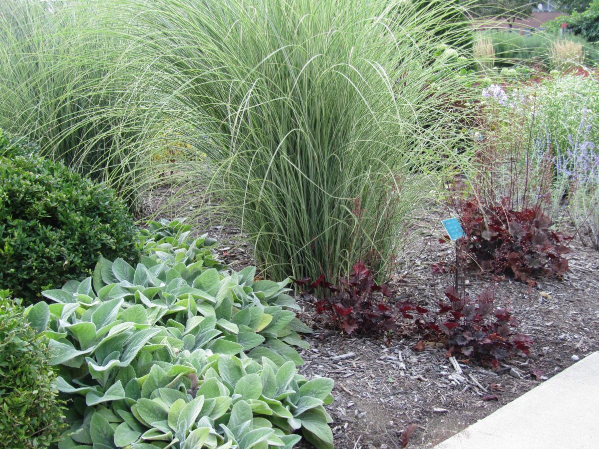 steven m  still perennial garden designed by adrian bloom