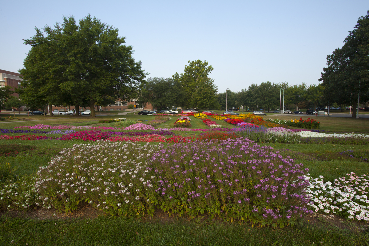 Cultivar Trial Gardens Chadwick Arboretum Amp Learning Gardens