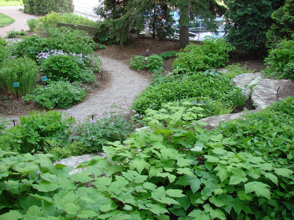 Katherine H Van Fossen Wildflower Garden Chadwick Arboretum - Wild flower garden
