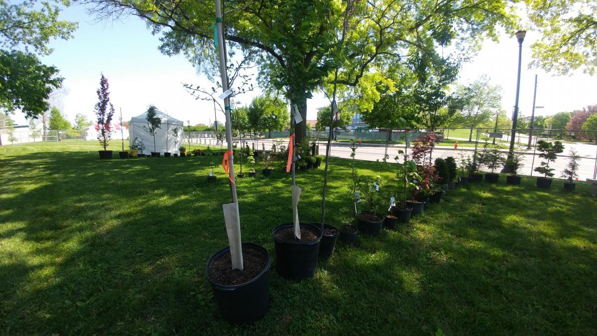 Auction Plants