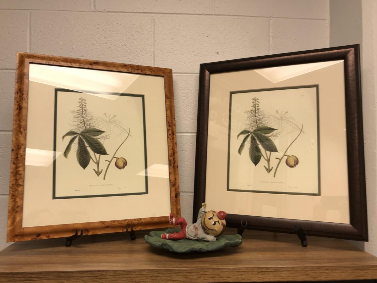 Aesculus Parviflora Print Options