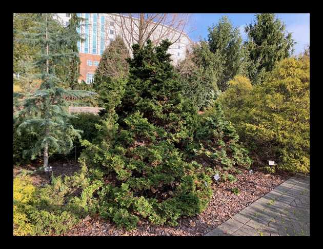 A picture containing tree, outdoor, plant, coniferDescription automatically generated